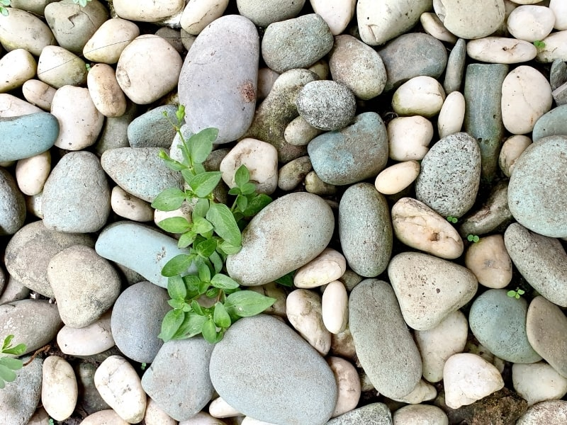 stones for gardening
