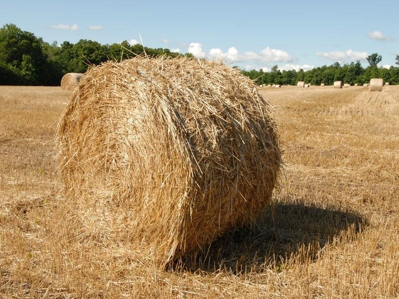 straw bale for gardening