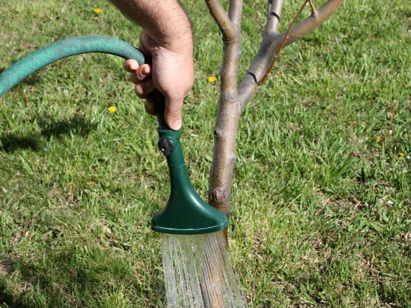 watering apple tree