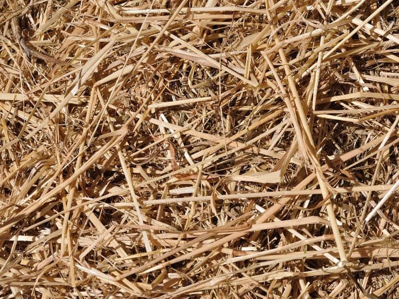 what is straw bale gardening