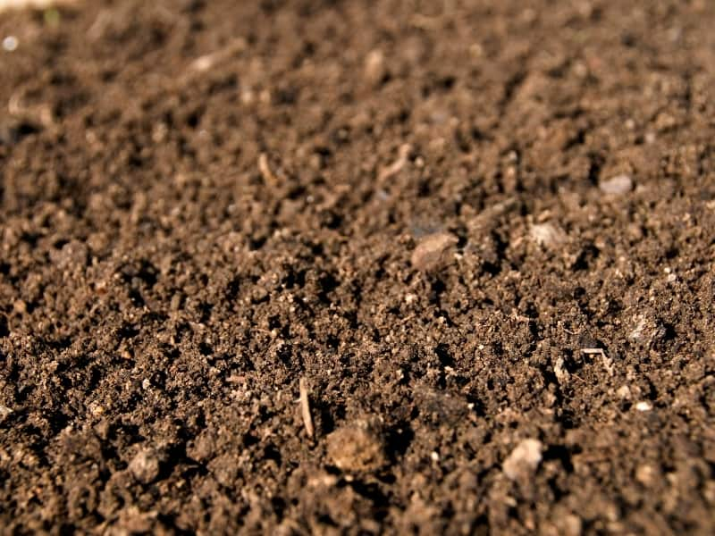what kind of soil