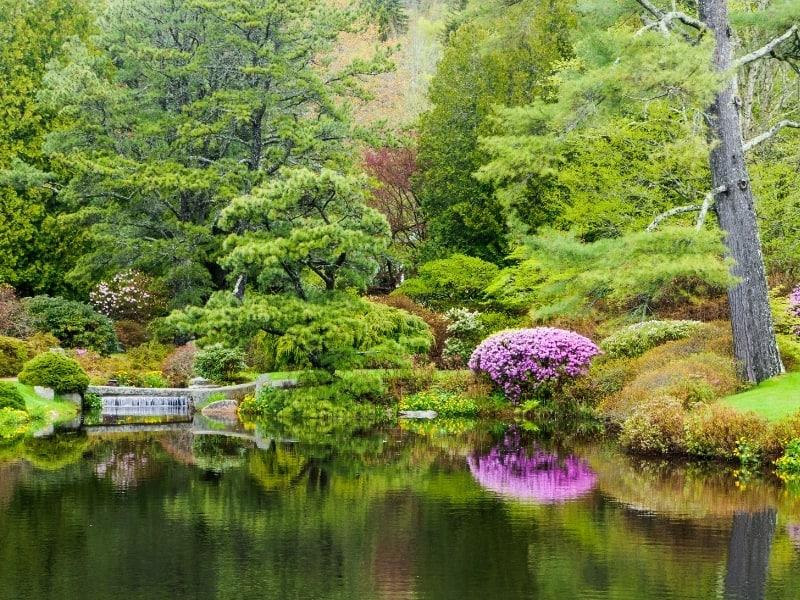 woodland garden designs