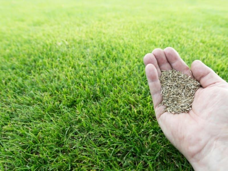 choosing grass seeds