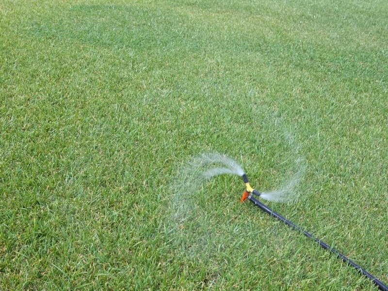 how to water grass