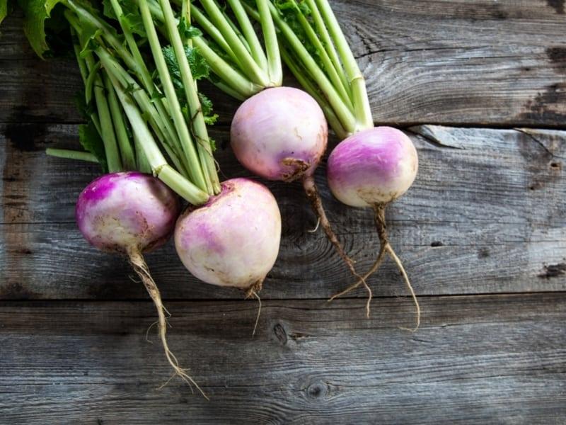choosing turnip seeds