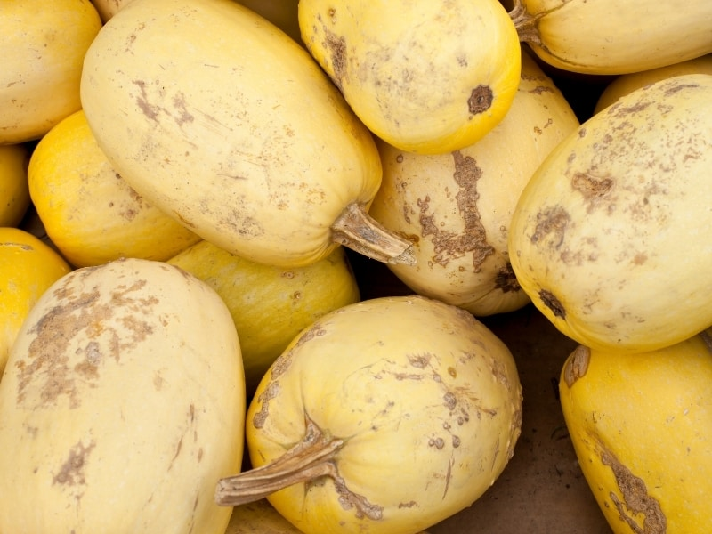 what happens if you don't harvest squash