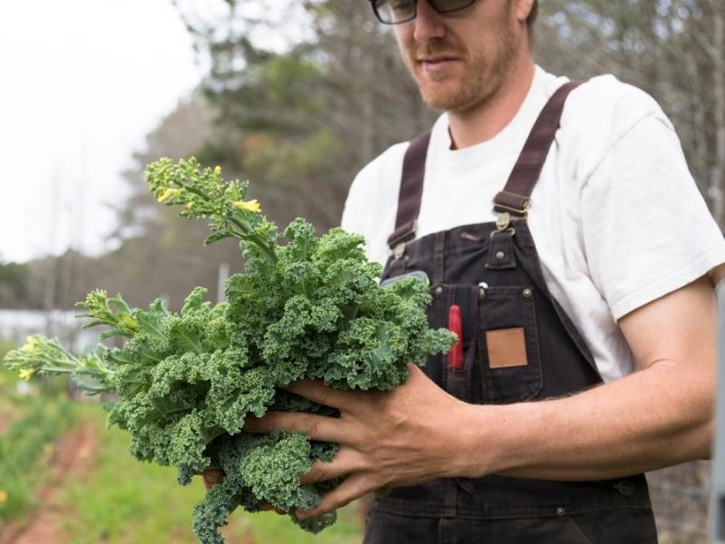 eating kale after harvesting