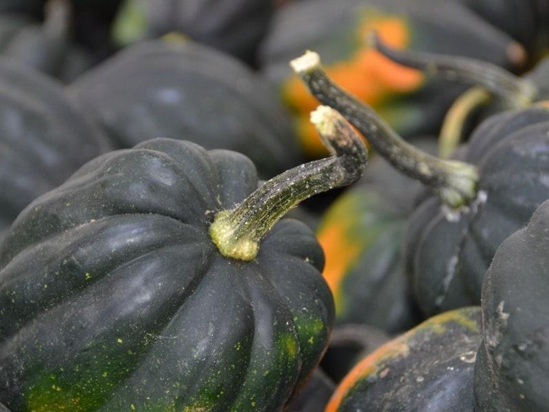 how to harvest acorn squash