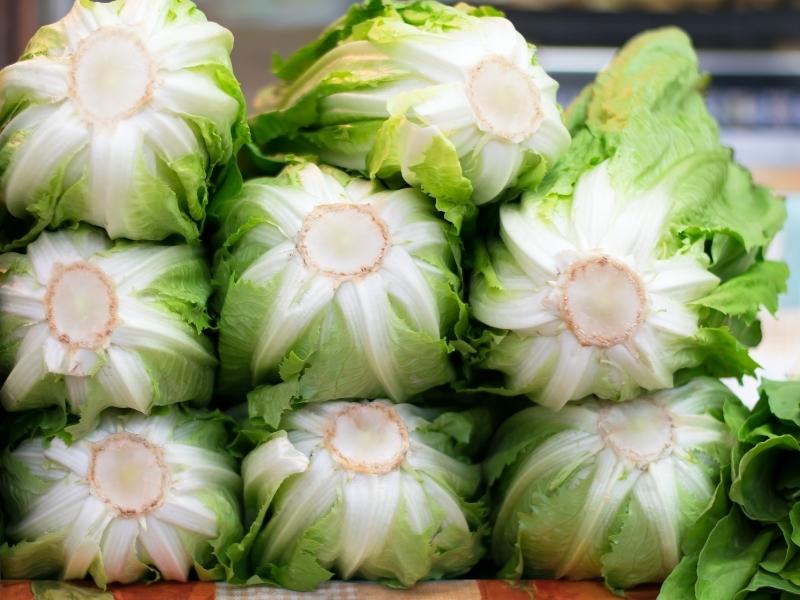 how to harvest romaine lettuce