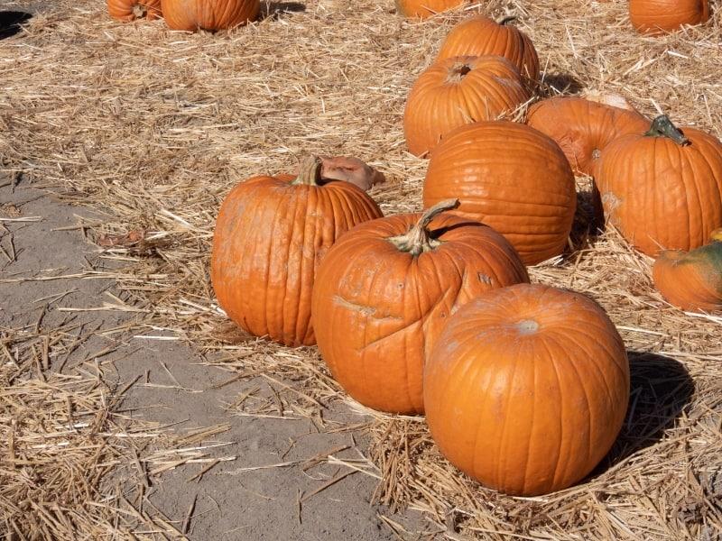 washing pumpkins