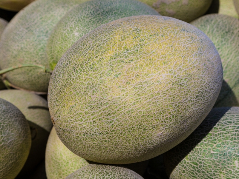 when to harvest cantaloupe