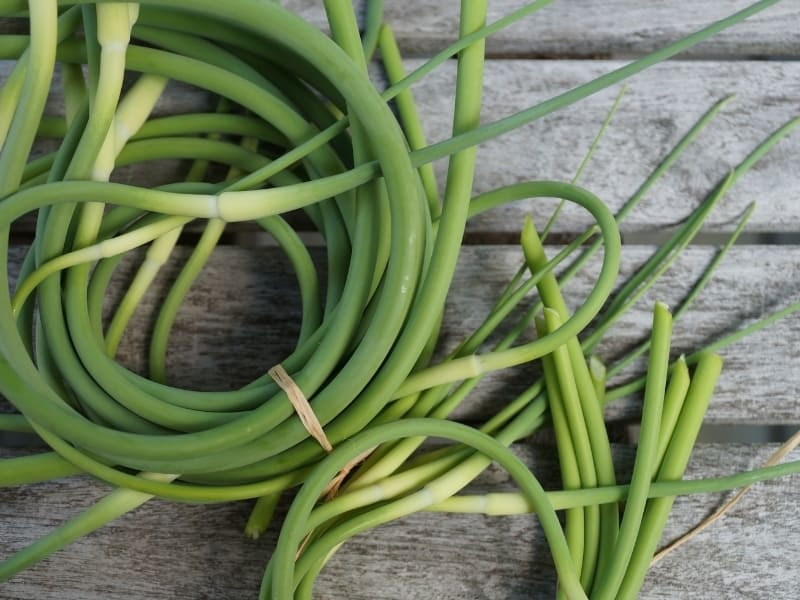 how to harvest garlic scapes