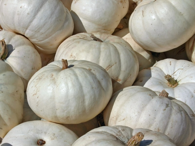 risks of eating too much white pumpkin
