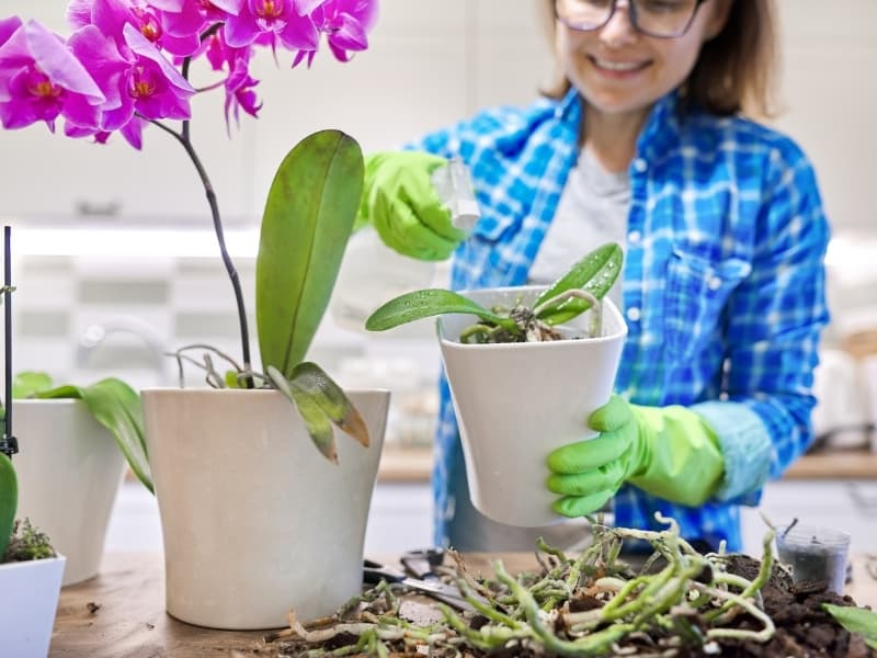 when to repot orchids