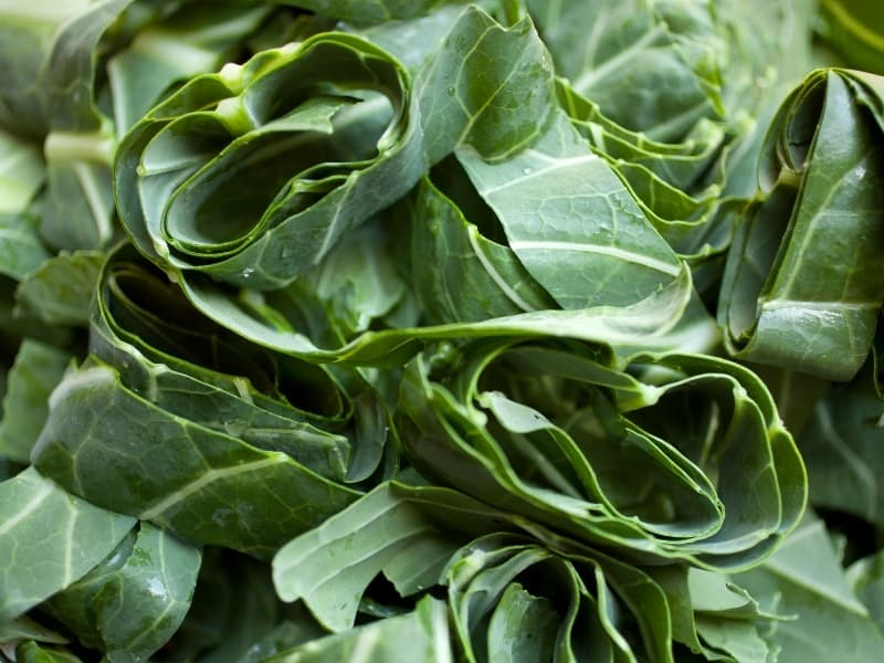 how to harvest collard greens