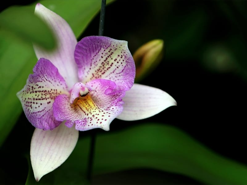 ways to help orchids bloom