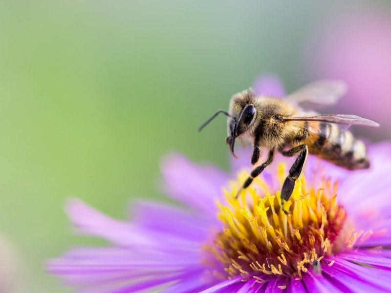 what attracts bees