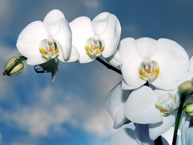 when do orchids bloom