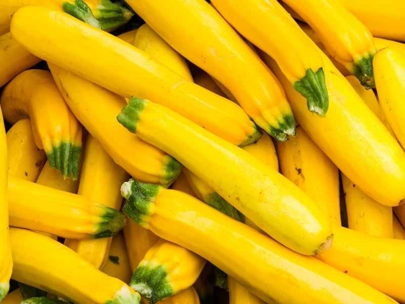 how to harvest yellow squash