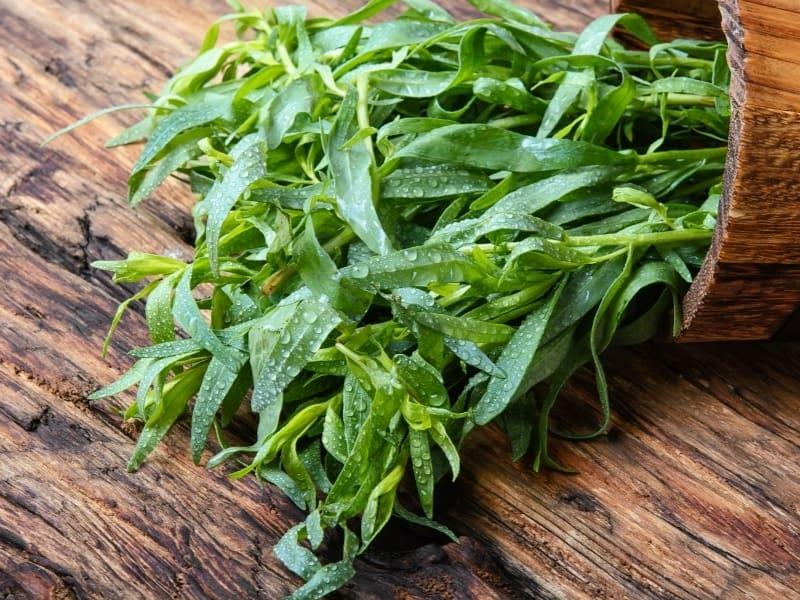 what herbs are perennials