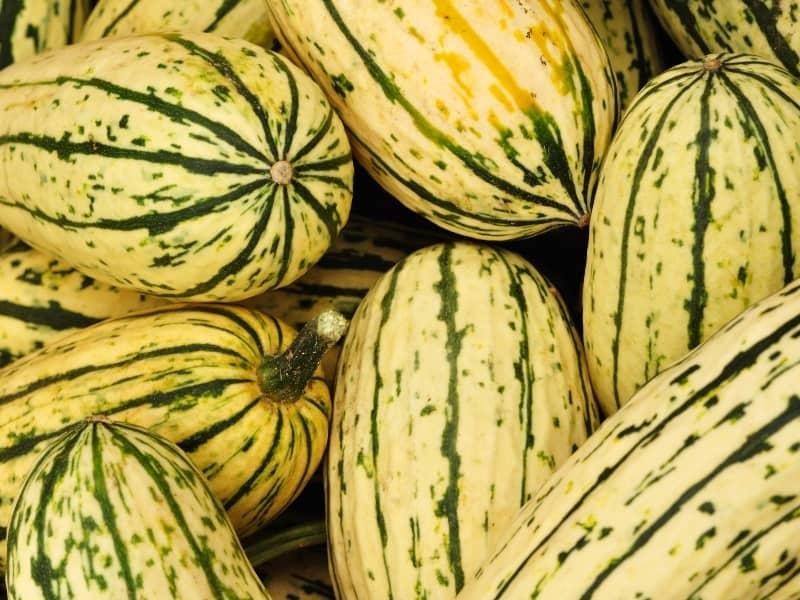 when to harvest delicata squash