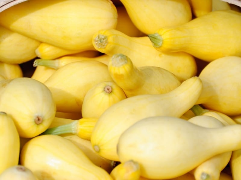when to harvest yellow squash